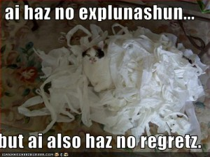 funny-pictures-cat-has-no-explanations-and-no-regrets