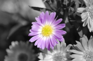 selective-flower