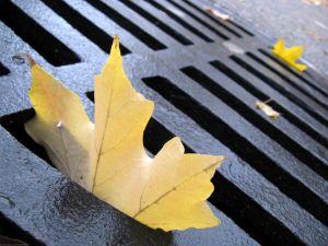 1221592_autumn_leaves_4
