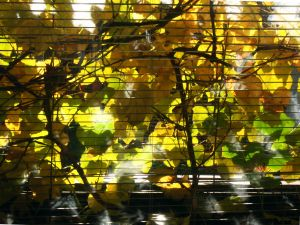 848046_window_shade