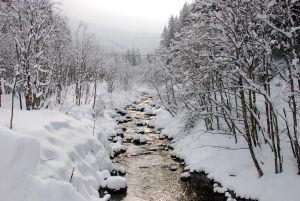1233421_winter_scenery_